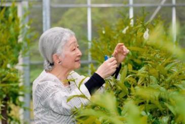 Michiko du Japon et la culture de la soie