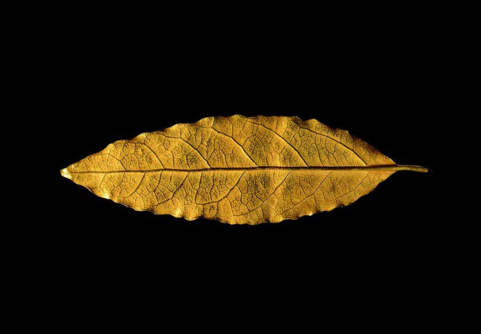 feuille-or-osenat-couronne-napoléon-sacre-encheres-e1506678605662
