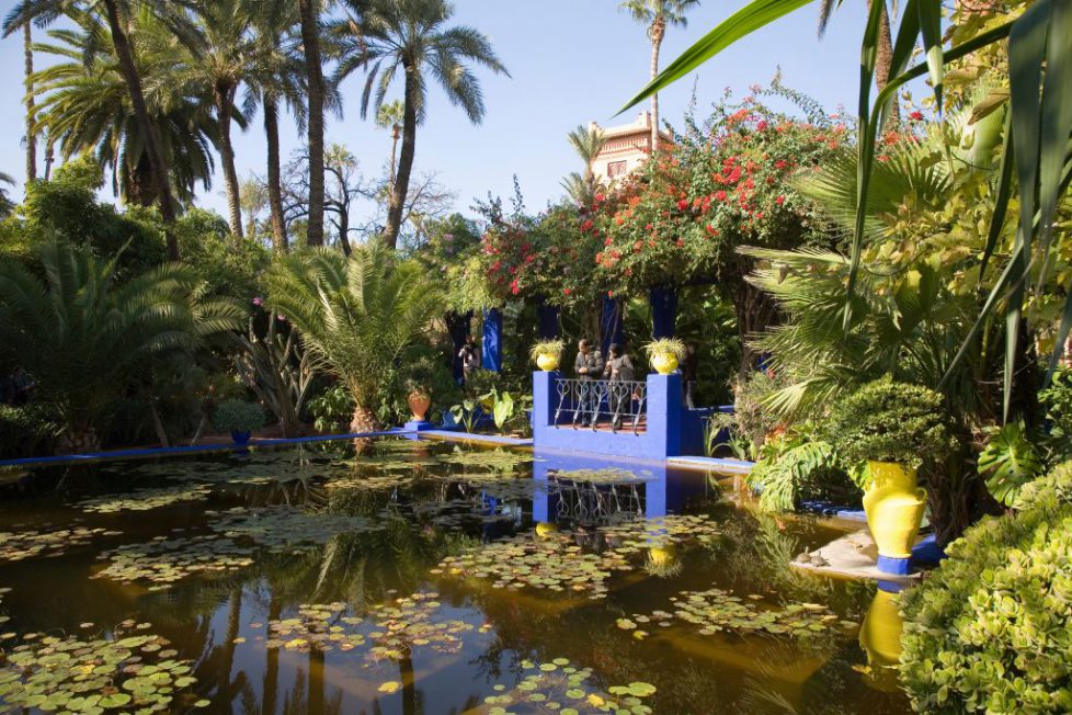 africa, morocco, marrakech, jardin majorelle created by the stylist yves saint-laurent