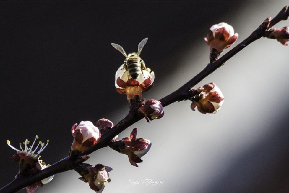 Bee.-Sophie-de-Roumanie-Photographie3