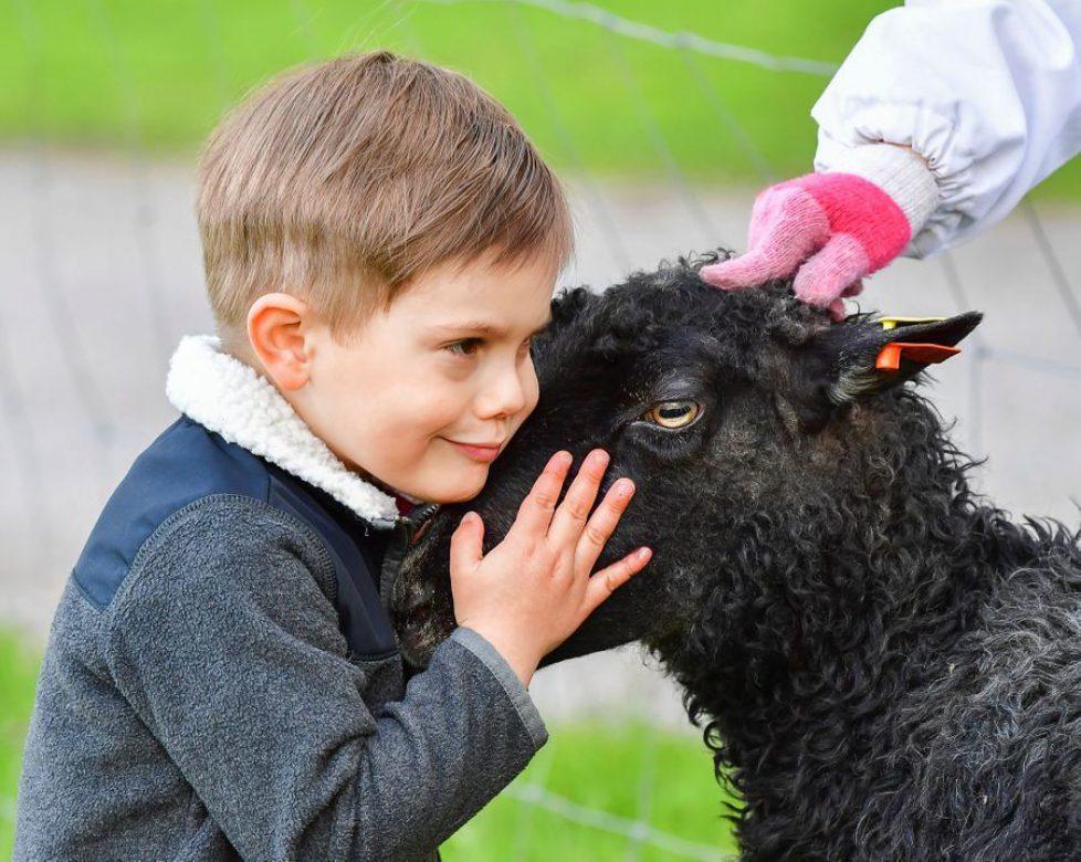 PRINCE OSCAR PLAYS WITH SHEEP